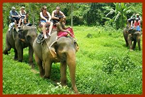 Koh Chang Elephant Trek Ban Kwan Chang