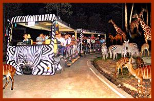 Night zoo Chiang  Mai