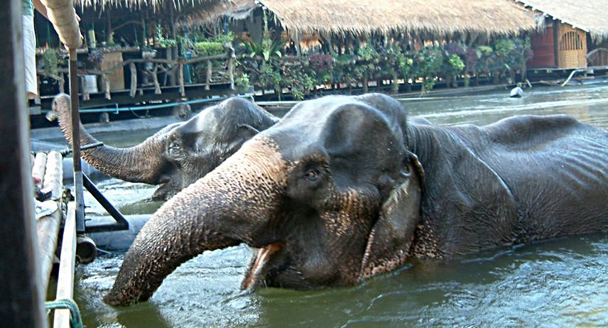 Wake up call by elephants at River Kwai Jungle Raft